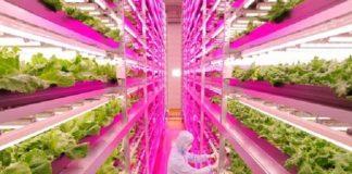 Ferme intérieure où les salades poussent plus 100 fois plus vite Mirai