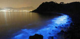 Noctiluca scintillans pollution Hong Kong