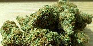 L'économie du cannabis dans le Colorado