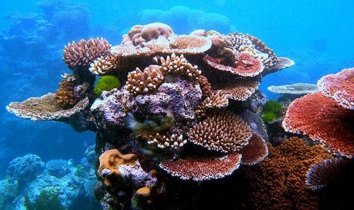 Pollution plastique, corail, Grande Barrière, Australie