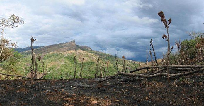 Déforestation, désastre, planète, restauration des forets d'ici 2020
