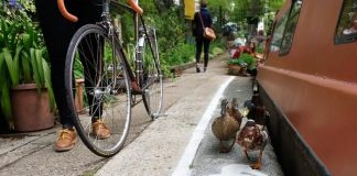 Piste, canards, Royaume-uni, vélo, piéton