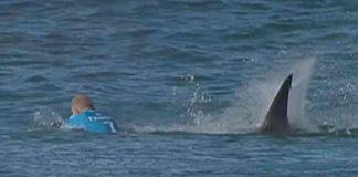 Mick Fanning, J Bay Open, attaque requin