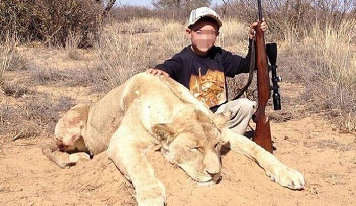 enfant, lion, mort, safari