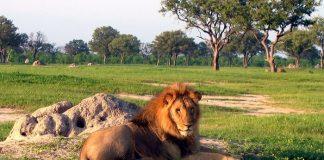 jericho lion pas mort, frère cecil