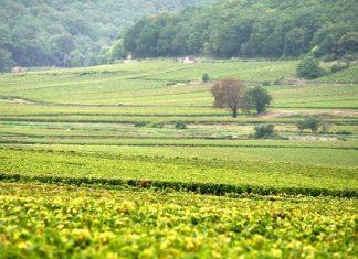 vins les plus chers au monde, Bourgogne