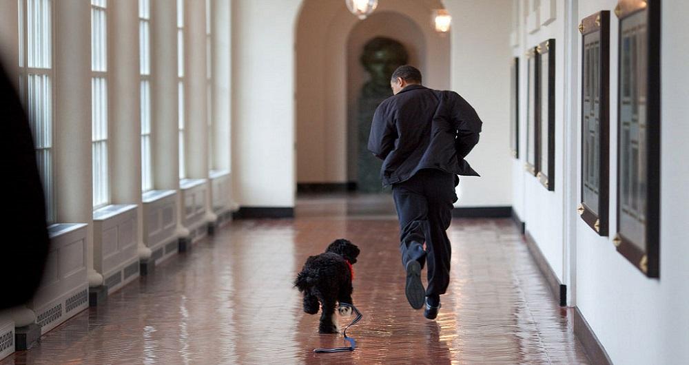 Barack Obama, Court, Chien