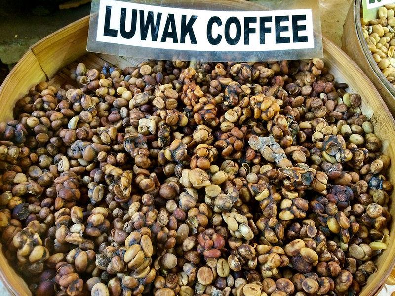 Kopi Luwak, excréments de civettes