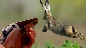 La chasse en France le dimanche
